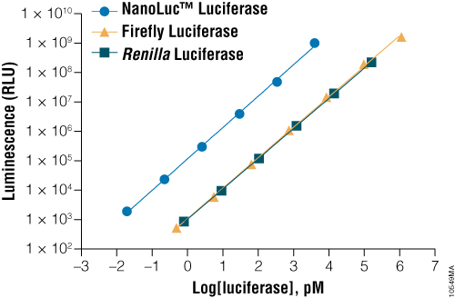 A comparison of the sensitivity of NanoLuc®, firefly and Renilla luciferase assays.